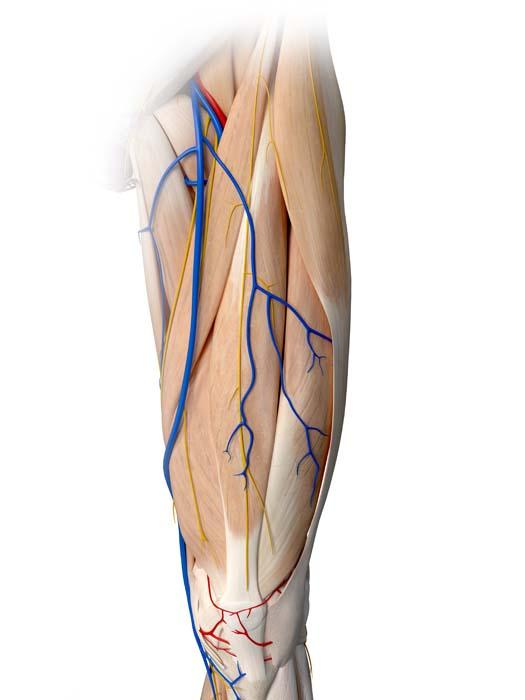 3d illustration eines beines mit hervorgehobenen venen und arterien