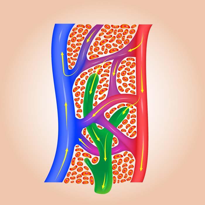 zeichnung von lymphwegen